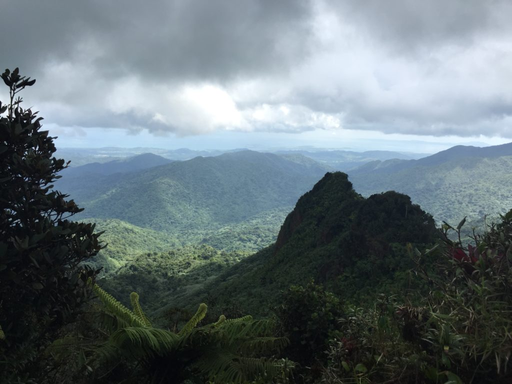 El Yunque National Forest View